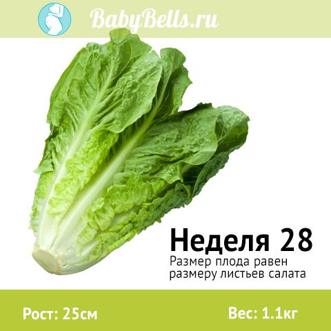 Неделя 28 - листья салата