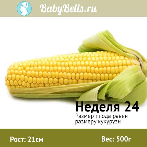 Неделя 24 - кукуруза