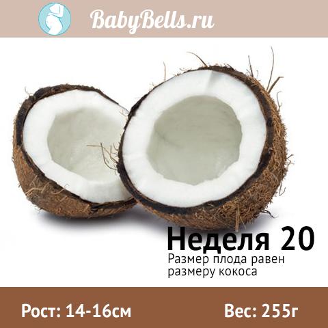 Неделя 20 - кокос