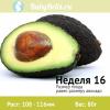 Неделя 16 - авокадо