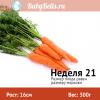 Неделя 21 - морковь