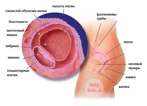 на симптомы ранних сроках беременности беременности, Симптомы