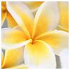 Фотография Аленький цветочек
